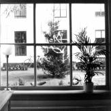 Foto21-kerstboom